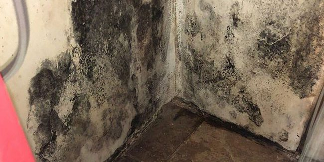 Black Mold Removal